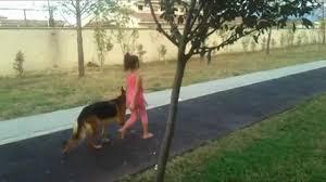Satılık Rottweiler Antalya