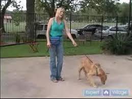 Köpek Eğitimi Hareketleri
