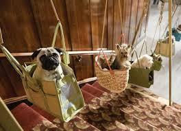 Köpek Eğitimi Ekipmanları