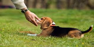 Köpek eğitimi hangi ayda başlar ?
