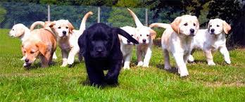 Ucuz köpek eğitim çiftliği