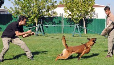 Silivri Köpek Eğitim Çiftliği
