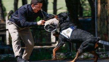 Şile Köpek Eğitim Merkezi