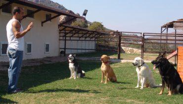 Sancaktepe Köpek Pansiyonu
