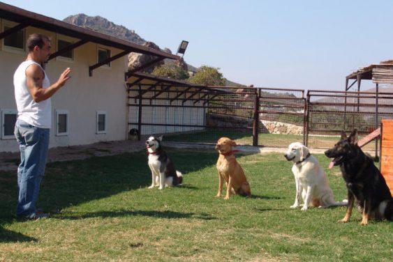 Güngören Köpek Oteli