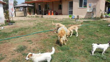 Köpek Oteli Sultangazi