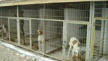 Küçükçekmece Köpek Eğitim Çiftliği