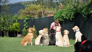 Gaziosmanpaşa Köpek Pansiyonu