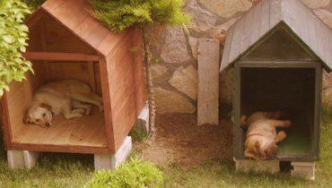 Köpek Oteli Ümraniye