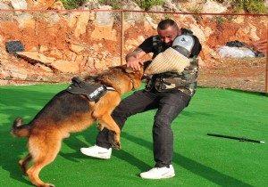 Köpeklerin Doğru Ve Teknik Eğitimi
