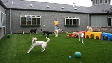 Şaşkınbakkal Köpek Pansiyonu