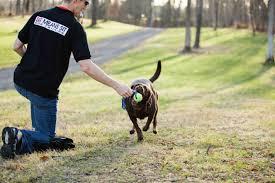 Güngören Köpek Eğitimi