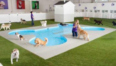 Köpek Oteli Sancaktepe