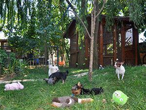 Köpek oteli İstanbul fiyat