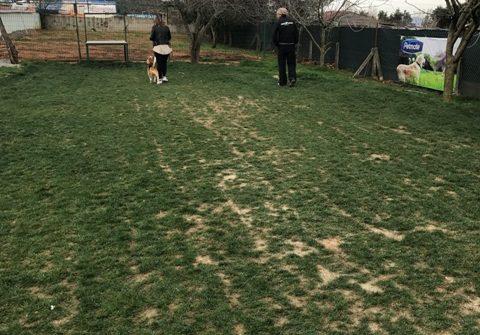 Kopay Köpek Eğitimi
