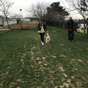 Köpek Eğitmenliği Kursu