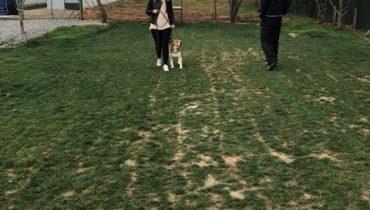 Köpek İleri İtaat Eğitimi