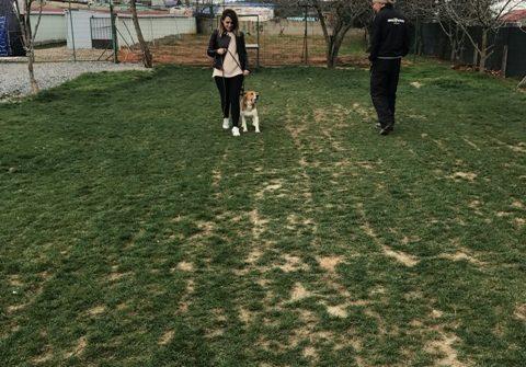 İstanbul Hasanpaşa Köpek Pansiyonu