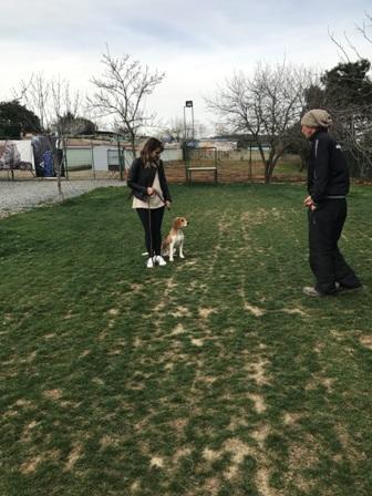 Köpek Eğitim Okulu İstanbul