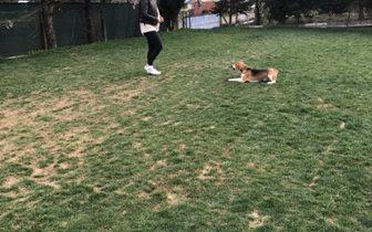 St Bernard Köpek Eğitimi