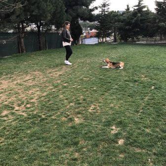 İstanbul Sarıyer Köpek Pansiyonu