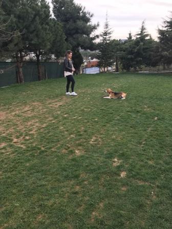 Süs Köpeği Eğitimi Verenler