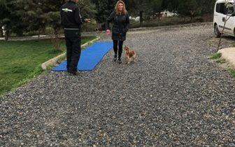 Köpek Eğitimi Beylikdüzü Adresi