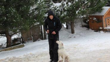 Sultanbeyli Köpek Eğitim Çiftliği
