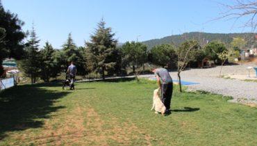 Sultanbeyli Köpek Eğitim Merkezi İstanbul