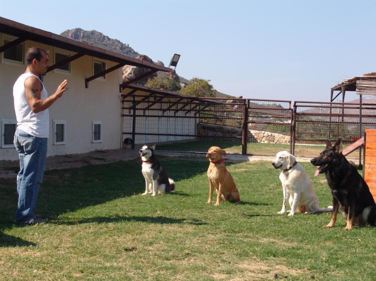 Köpek eğitimi güzelbahçe