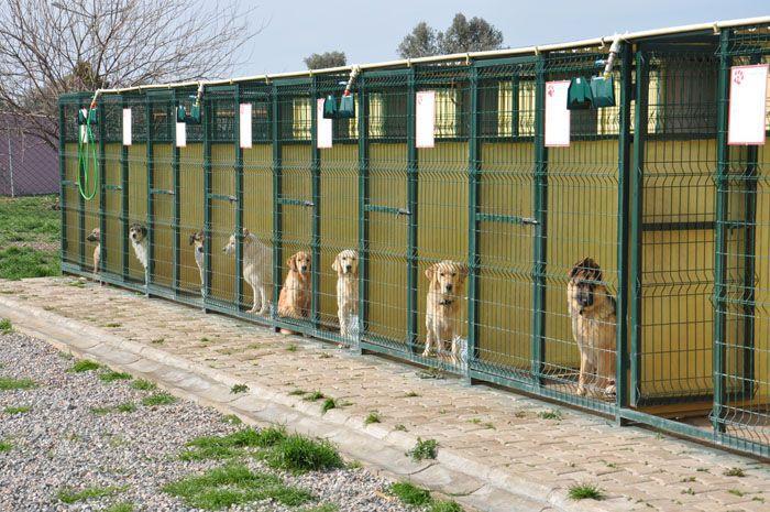 Köpek Misafirhaneleri