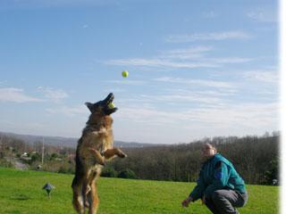 Köpek Eğitim Merkezleri