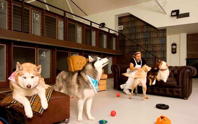 Satılık Rottweiler Kuşadası