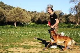 Köpek eğitimi hakkında