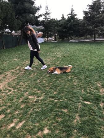 Arnavutköy Köpek Pansiyonu