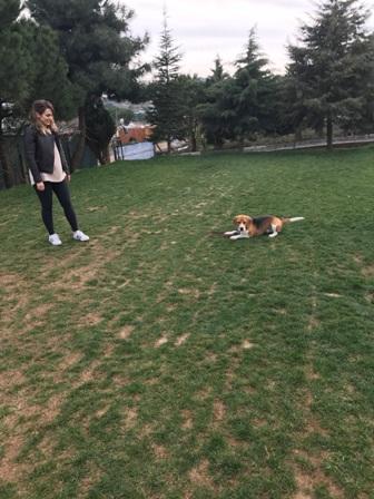 Köpek eğitimi Bahçelievler var mı nerde