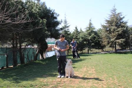 Köpek Eğitimi Kafkas Çoban