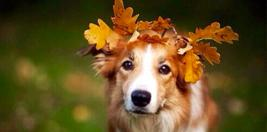 Köpek Pansiyonu